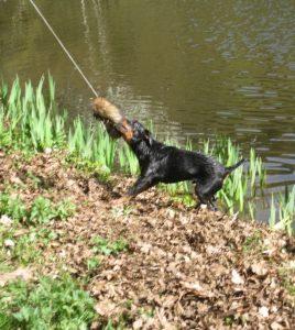 Jagd Gapa Hundewesen Ausbildung