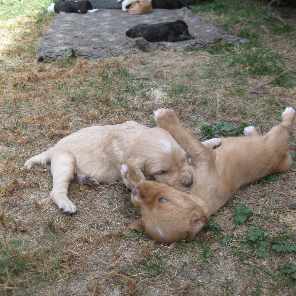 Jagd Gapa Hundewesen Ausbildung Welpenpraegung